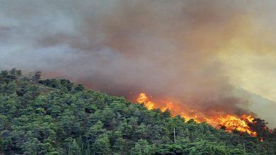 Photo de Feux de forêt: 10 wilayas touchés, 2 morts à Tipaza, en 24 heures