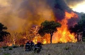 Photo de Feux de forêt à Tipaza: 19 personnes arrêtés et 6 en fuite dont 4 étrangères